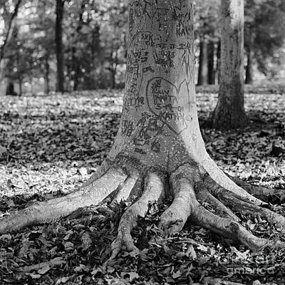 Photograph - The  Scribble Tree by Patrick M Lynch
