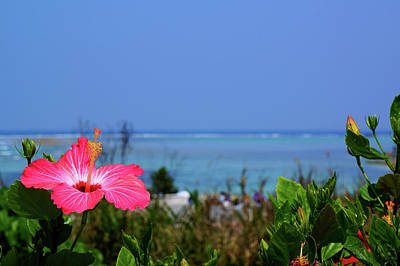 The Sea And Hibiscus Of Okinawa Original