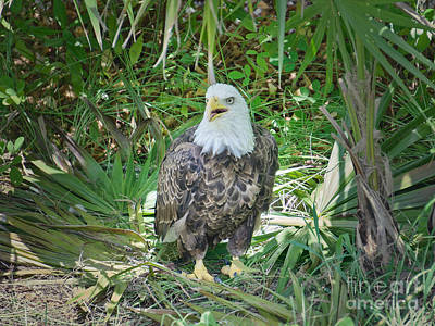 Photograph - The Sea Eagle by Judy Kay
