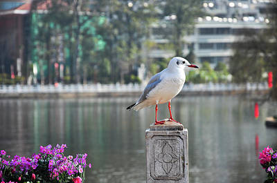 Photograph - The Seagull by Carl Ning