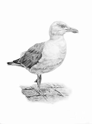 Drawing - The Seagull Strut by Pencil Paws
