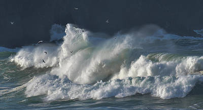 Photograph - The Seagulls And The Wave by Barbara Walsh
