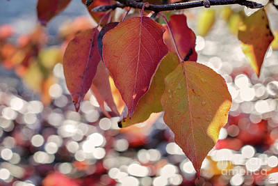 Photograph - The Season Of The Fall Begins by Linda Lees