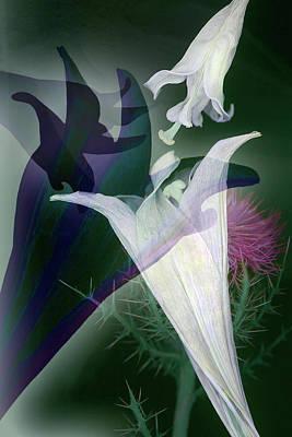 Photograph - The Secret Life Of Plants by Dolores Kaufman