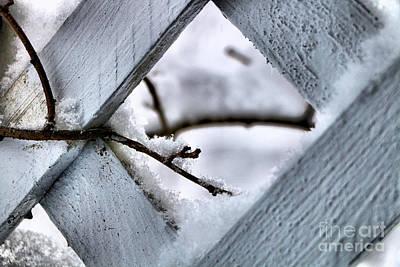 Bittersweet Photograph - The Secret Snowy Garden by Elizabeth Dow