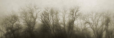 Sepia Tone Photograph - The Secrets Of The Trees by Scott Norris