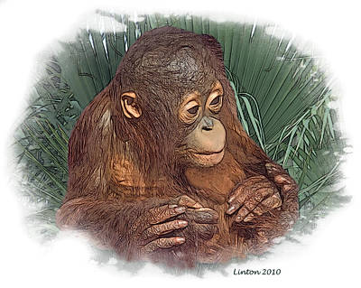 Orangutan Digital Art - The Security Of A Mother's Hands by Larry Linton