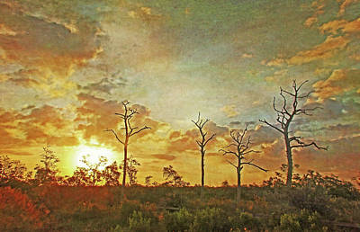 The Sentinels - Florida Sunrise By Hh Photography Art Print