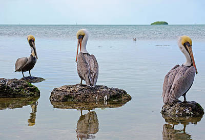 Pelican Photograph - The Sentinels by Kenneth Albin