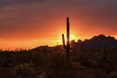 Photograph - The Serene Sonoran  by Saija Lehtonen