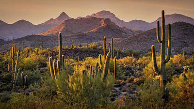 Photograph - The Serenity Of The Sonoran  by Saija Lehtonen