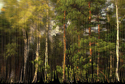 Photograph - The Serpentine Forest by Aleksander Rotner