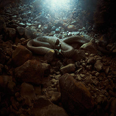 Woman Cave Photograph - The Serpent's Lair by Michal Karcz
