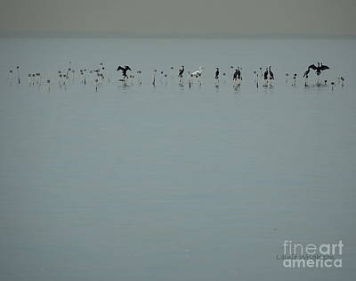 Photograph - The Shallows by Lainie Wrightson
