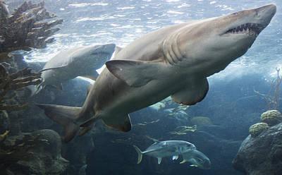 The Shark King Print by Tim Michael Ufferman