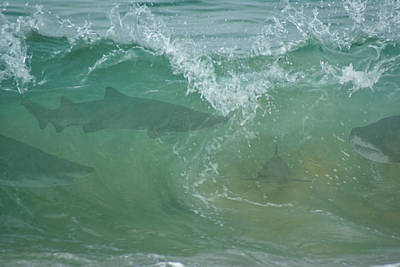 Photograph - The Sharks by Ernie Echols
