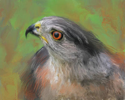 Shins Painting - The Sharp Shinned Hawk by Jai Johnson