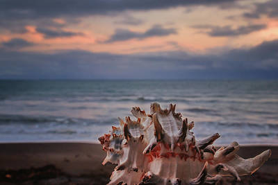 Ethereal Dreamy Ocean Photograph - The Shell by Marnie Patchett