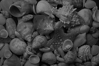 Photograph - The Shells Black And White by Christopher Kirby