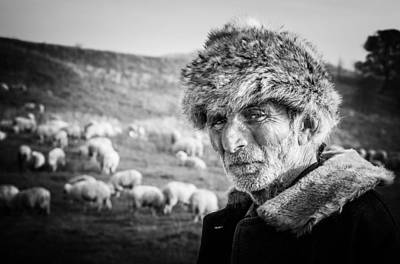 Sheep Portrait Photograph - The Shepherd by Cornel Mosneag