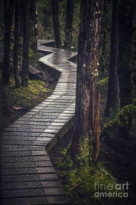Photograph - The Shining Path by Evelina Kremsdorf