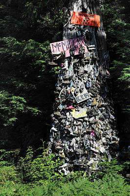 Photograph - The Shoe Tree by Mary Lee Dereske