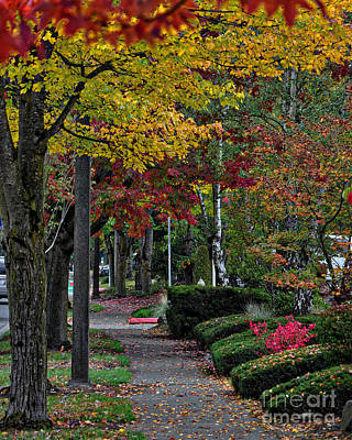 Photograph - The Sidewalk And Fall by Kirt Tisdale