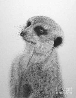 Meerkat Drawing - The Silent Sentry by Jennifer Watson