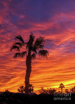Photograph - The Silhouetted Palm Tree by Robert Bales