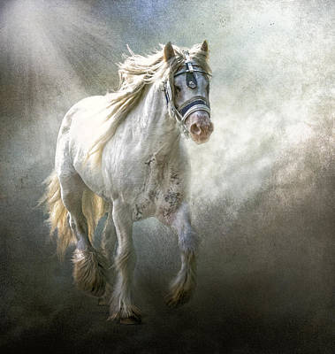Gipsy Photograph - The Silver Cob by Brian Tarr