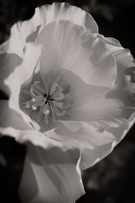 Photograph - The Simple Beauty Of A Poppy by Lynn Bauer