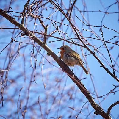 Photograph - The Singer. European Robin by Jouko Lehto