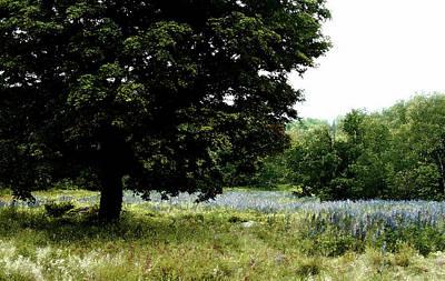 Photograph - The Sitting Tree by Wayne King