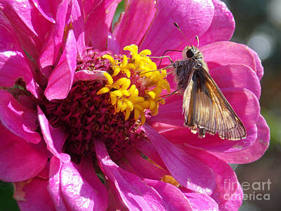 Classical Masterpiece Still Life Paintings - The Skippers Zinnia by Anita Faye
