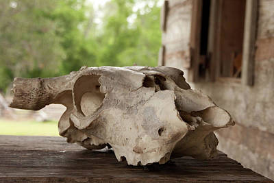 Photograph - The Skull by James Woody