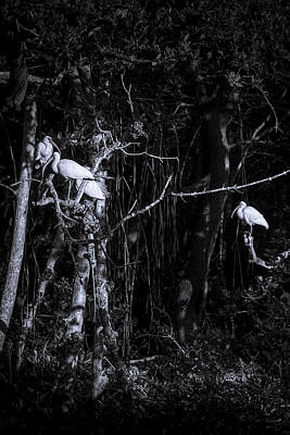 Ibis Photograph - The Sleeping Quaters by Marvin Spates