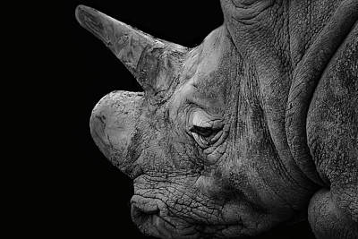 Photograph - The Sleepy Rhino by Alan Campbell