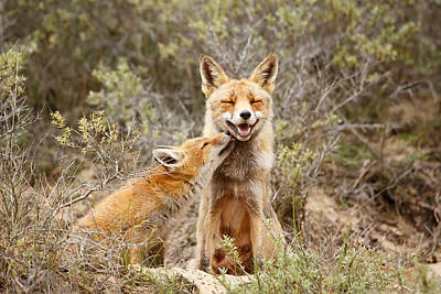 Licking Photograph - The Smiling Vixen And The Happy Kit by Roeselien Raimond