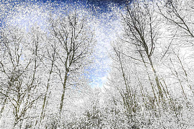 Photograph - The Snow Forest Art by David Pyatt