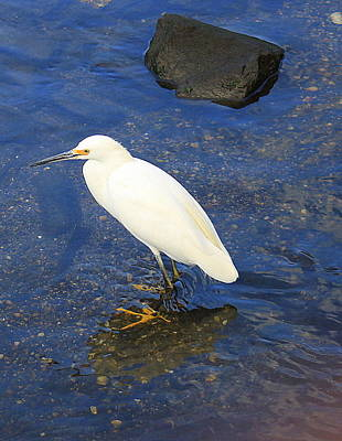 Photograph - The Snowy Egret by Dora Sofia Caputo Photographic Design and Fine Art