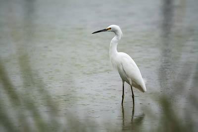 Photograph - The Snowy Egret  by Saija  Lehtonen