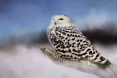 Photograph - The Snowy Owl by Lana Trussell
