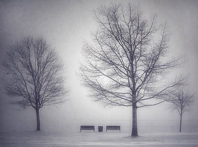 Photograph - The Soft Breath Of Winter by Tara Turner