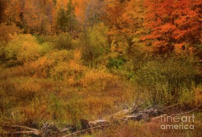 Photograph - The Soft Colors Of Autumn by Matthew Winn
