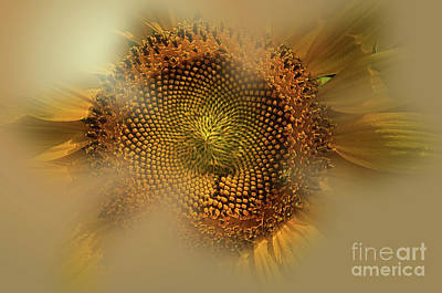 Photograph - The Soft Glow by Donna Brown