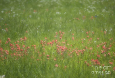Photograph - The Soft Nature Of Spring by Fred Lassmann