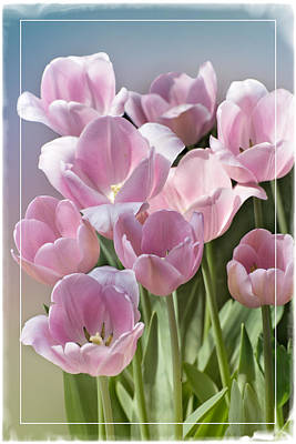 The Soft Side Of Spring Print by Lynn Bauer