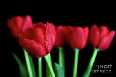 Photograph - The Softer Tulips by Tracy Hall