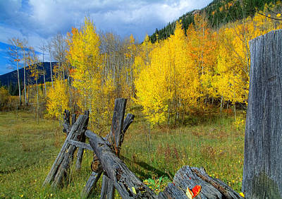 The Song Of Aspens Art Print by Tim Reaves