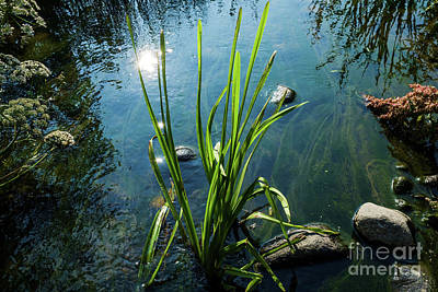 Photograph - The Song Of Small Stream by Ismo Raisanen